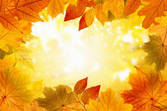Beautiful fall background. Beautiful seasonal background - bright sun shine through yellow, orange and red maple leaves, season is fall, sunny weather Stock Images