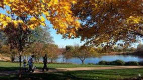 Beautiful lake in Chicago botanical garden stock image