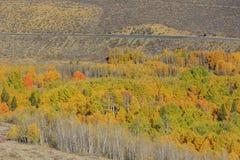 Beautiful fall color in California Royalty Free Stock Photos