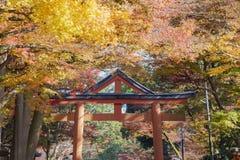 Beautiful fall color of Hiyoshi Taisha. At Otsu, Shiga, Japan Royalty Free Stock Photo