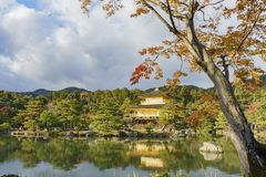 Beautiful fall color of Kinkaku-ji. Kyoto, Japan Royalty Free Stock Photography
