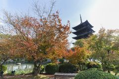 Beautiful fall color of To-ji Royalty Free Stock Photography