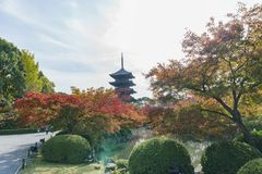 Beautiful fall color of To-ji Stock Images