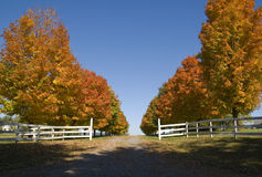Beautiful fall colored lane  Royalty Free Stock Photos