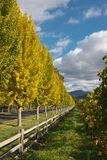 Beautiful fall colored trees Royalty Free Stock Photography