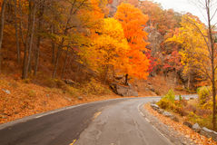 Beautiful fall colors. Stock Images