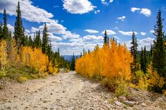 Beautiful Fall Colors At Lake Lomond. Beautiful fall colors from the changing aspen leaves at Lake Lomond. Idaho Springs, Colorado stock images