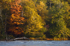 Beautiful fall colors trees. On the river bank stock photo