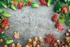 Beautiful fall composition on concrete background. Fresh green autumn branches of hop, dried hop and red twigs of viburnum on concrete background. Top view. Copy Royalty Free Stock Images