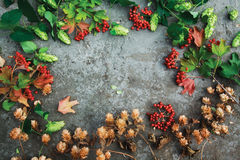 Beautiful fall composition on concrete background. Fresh green autumn branches of hop, dried hop and red twigs of viburnum on concrete background. Top view Stock Photography