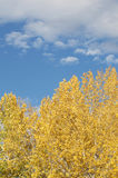 Beautiful fall day Royalty Free Stock Photography