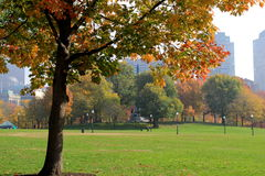 Beautiful Fall day in the park. Gorgeous Fall day in the park, with colorful foliage on trees, grassy lawns and cityscape in the distance stock images