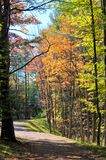 Beautiful Fall day. On a quiet path through the forest royalty free stock image