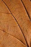 Beautiful fall foliage Stock Photo