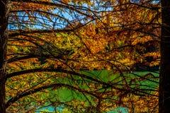 Beautiful Fall Foliage on the Guadalupe River, Texas. Stock Photos