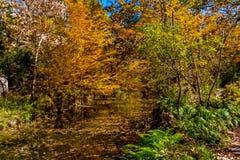 Beautiful Fall Foliage on Hamilton Creek, Texas. Royalty Free Stock Photo