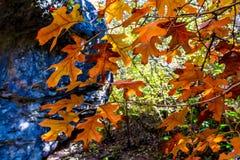 Beautiful Fall Foliage on Hamilton Creek, Texas. Royalty Free Stock Image