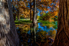 Beautiful Fall Foliage Reflected on the Guadalupe River, Texas. Stock Images