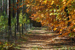 Beautiful fall in forest. On a warm and sunny day image  looking down a way Stock Photos