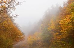 Beautiful fall forest foggy scenery Stock Photo