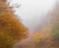 Beautiful fall forest foggy scenery Stock Images