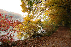 Beautiful fall forest path at Danube river bank Stock Images