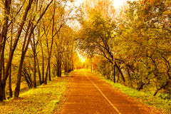Beautiful fall landscape with narrow alley road Royalty Free Stock Photo