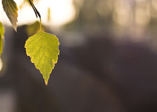 Beautiful Fall. Leaf of the tree Royalty Free Stock Photos