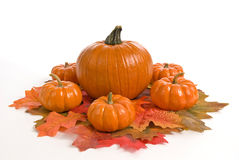 Beautiful Fall Pumpkin Centerpiece Stock Image