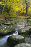 Beautiful fall scene. A stream carving its way through a colorful autumn forest Stock Photo