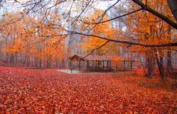 Beautiful fall scene royalty free stock photos