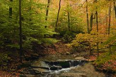 Beautiful fall scene with steam and fall foliage Stock Images