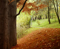 Beautiful fall scenery. Wonderful autumn scenery in a park stock photos