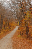 Beautiful fall scenery in the forest. Royalty Free Stock Photos