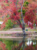 Beautiful fall scenery Royalty Free Stock Images