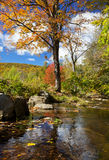 Beautiful Fall stream Stock Image