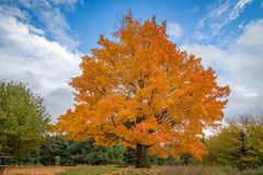 Beautiful fall trees royalty free stock photography