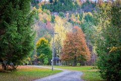 Beautiful fall trees Stock Photos