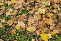 Beautiful fallen autumn leaves. Colorful and bright background made of fallen autumn leaves royalty free stock images