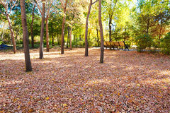 The beautiful fallen leaves Royalty Free Stock Photo