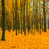 Beautiful fallen park Stock Photo