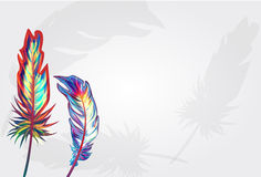 Beautiful falling feathers Royalty Free Stock Photography