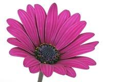 Beautiful fanfare flower Stock Photos