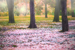 Beautiful fantastic of flowers falling in colorful park use for Stock Photos