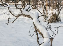 An beautiful fantastic old gray and brown branchy tilted tree with white snow is in winter stock photos
