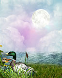 Beautiful Fantasy Stock Images