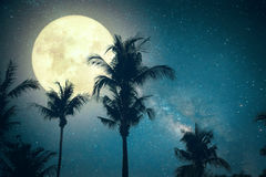 Beautiful fantasy palm tree tropical beach with Milky Way star in night skies, Stock Photo