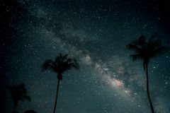 Beautiful fantasy of palm tree at tropical beach with milky way stars in night skies background. Retro style artwork with vintage color tone Royalty Free Stock Photos