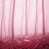 Beautiful fantasy red color forest Royalty Free Stock Photography
