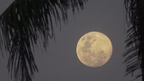 Beautiful fantasy tropical beach, full moon. Maldives video. Horizontal stock footage
